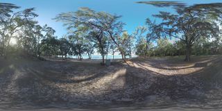 360 VR Scene of Mauritius nature and trees on the ocean coast. 360 VR video. View of Mauritius nature. Shadowy beach with trees, clear water of blue ocean and stock footage