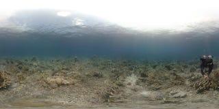 360 vr Taucher schwimmt auf einem Korallenriff stock video