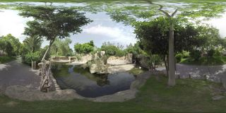 360 VR View to Valencia Bioparc and flamingos, Spain. VALENCIA, SPAIN - JULY 15 2016: 360 VR video. Green area of Valencia Biopark with flamingos ihabiting area stock footage
