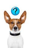 Vraag de hond Royalty-vrije Stock Foto's