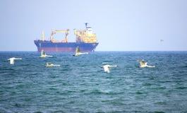 Vrachtschip en vliegende zwanen Royalty-vrije Stock Foto
