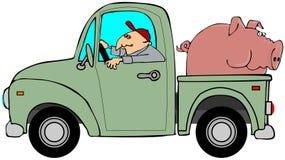 Vrachtwagen die een varken vervoert Stock Foto