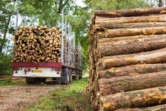 Vrachtwagen en aanhangwagen met de boomstammen die van de pijnboomboom wordt geladen Stock Afbeelding