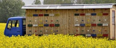 Vrachtwagen met bijenkorven die voor bijen zich op het gebied bevinden Inzameling van Honing Stock Afbeeldingen