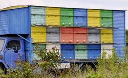 Vrachtwagen met bijenkorven die voor bijen zich op het gebied bevinden Inzameling van Honing Royalty-vrije Stock Afbeelding