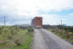 Vrachtwagen met lading van boomboomstammen van eucalyptus Stock Foto