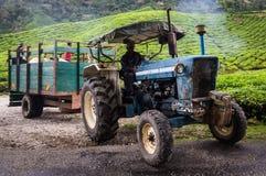 Vrachtwagen op theeaanplanting stock afbeeldingen