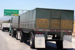 Vrachtwagenlading van grapefruit Royalty-vrije Stock Foto's