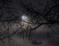 Vrai ciel de photo de darck d'éclipse solaire avec la branche images libres de droits
