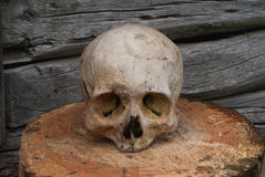 Vrai crâne humain sur le fond d'un mur en bois images libres de droits