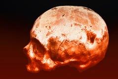Vrai crâne humain sur un fond noir et rouge d'isolement photos stock