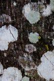 Vrai fond en pierre de texture gris Bois Surface de roche St gris Photo stock