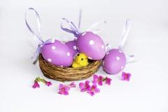 Vrai nid avec les oeufs de pâques pourpres Photographie stock libre de droits