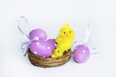 Vrai nid avec les oeufs de pâques pourpres Photo libre de droits