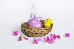 Vrai nid avec les oeufs de pâques pourpres et les poulets jaunes Photos libres de droits