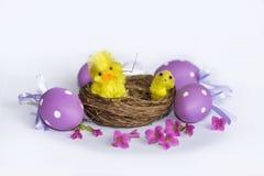 Vrai nid avec les oeufs de pâques pourpres et les poulets jaunes Photo stock