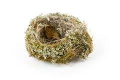 Vrai nid vide d'oiseau Photographie stock libre de droits