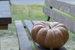Vrai potiron orange de Halloween avec le découpage image libre de droits