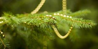Vraie branche de sapin avec des décorations Images libres de droits