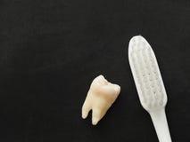 Vraie dent et brosse à dents blanche sur le fond noir Bon concept sain de dents photos libres de droits