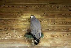 Vraie fauconnerie d'Eagle photos libres de droits