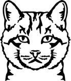 Vraie tête de chat illustration libre de droits