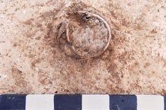 Vraies excavations archéologiques pot Vieillir-endommagé d'argile trouvant dans la terre avec la planche de mesure photographie stock libre de droits