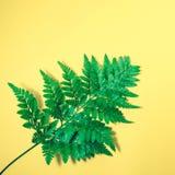 Vraies feuilles sur le fond de couleur en pastel Tropical botanique Images stock