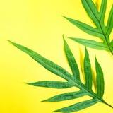 Vraies feuilles sur le fond de couleur en pastel Tropical botanique Photographie stock