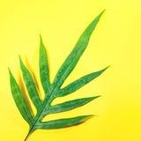Vraies feuilles sur le fond de couleur en pastel Tropical botanique Image stock