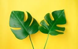 Vraies feuilles sur le fond de couleur en pastel Tropical botanique Photographie stock libre de droits