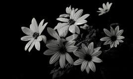 Vraies fleurs dans le black&white Photographie stock libre de droits