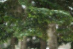 Vrais flocons de neige verticalement en baisse, tir sur des pins, backgro d'arbres Photo libre de droits