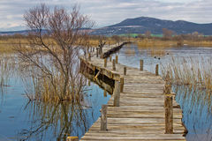 Vrana lake nature park wooden boardwalk Royalty Free Stock Image
