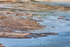 Vravrona Wetland Royalty Free Stock Photo