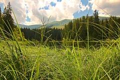 Vrbicke Pleso, Demanovska Dolina, Slovakien Royaltyfri Bild