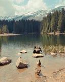Vrbickemeer in Tatra-bergen. Slowakije Royalty-vrije Stock Afbeelding