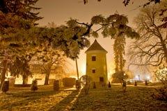 Vrbovec zimy nocy scena w parku Fotografia Royalty Free