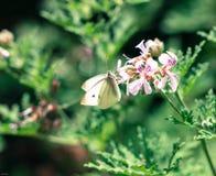 Vrede in de tuin Royalty-vrije Stock Foto