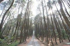 Vrede in een kalm bos stock fotografie