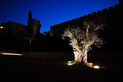 Vrede in Jeruzalem - Oude stadsmuren met Olijfboom bij dageraad, Jeruzalem Stock Foto