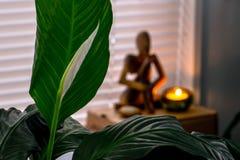 Vrede Lily Meditation stock foto's