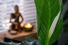 Vrede Lily Meditation stock afbeelding