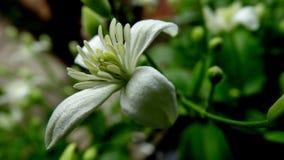 Vrede van mening en lichaam met bloemen en schoonheidsgelijkheid Royalty-vrije Stock Foto's