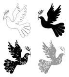Vredesduif met olijftak Stock Afbeeldingen
