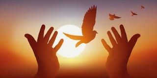 Vredessymbool met aangesloten bij handen die de vlucht van een vogel bij zonsondergang vrijgeven vector illustratie