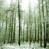 vreedzaam alpien bos dat in sneeuw wordt behandeld, Stock Afbeeldingen