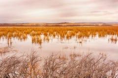 Vreedzaam Autumn Lake Stock Foto's