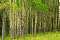 Vreedzaam bos stock afbeelding