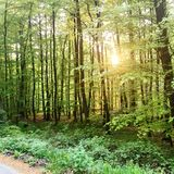 Vreedzaam bos in Duitsland Royalty-vrije Stock Foto